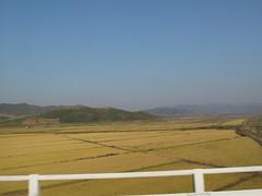 Incredibly Fertile DPRK (Kalle Anka) Tags: travel asia culture korea korean crop fields northkorea eastasia dprk fertile  koreanpeninsula   chosnminjujuiinminkonghwaguk democraticpeoplesrepublicofkorea chosn thelandofthemorningcalm