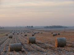 frosty rolls (David Sebben) Tags: county november cold rural clinton frosty iowa rolls cornstalk