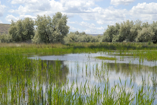 A restored wetland in central Washington is an example of how landowners working with NRCS can convert property to more pristine conditions.