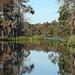 Capt Doug's Tidewater Tours' Suwannee River Trip