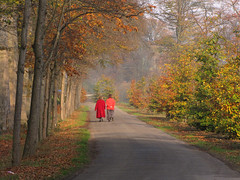 Enjoying Autumn (Wilma1962*) Tags: autumn trees fall bomen herfst walkers najaar wandelaars mygearandme mygearandmepremium mygearandmebronze mygearandmesilver mygearandmegold mygearandmeplatinum mygearandmediamond blinkagain