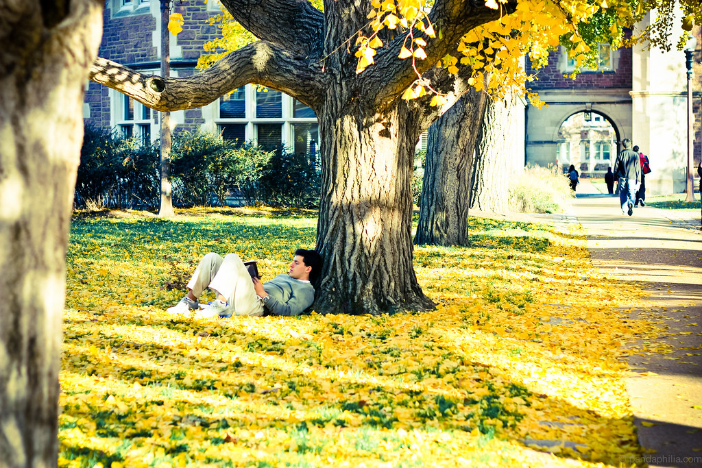 some dude chilling in the leaves