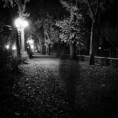 Can you see what I see? (Arianna_M(busy)) Tags: longexposure autumn trees get leaves by foglie alberi florence shine path walk we io used depechemode firenze autunno meandmyshadow cascine viale lungaesposizione parcodellecascine shineforme youcanshineforme followourstarsunderapaintedsky wellleavetheworldbehind werelearningtofly forgetthepicturesonyourtvscreen wellstealthevisions thatyoukeepforyourdreams youcanturnmeon iwasblindandisawthelight myangelcoming inabrilliantwhite youvebeenhangingfromaropeofmediocrity strungupbyyourinsecurities somebodyhastoshineforme meelamiaombra