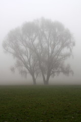 hide and seek (cc) (marfis75) Tags: november mist tree green nature weather fog germany out haze frost wiesbaden day niceshot nebel hessen creative meadow wiese commons exhibition structure hidden cc nebula koi gras grn grassland fluss rhein bume baum mystic figur wetter ausstellung stopmotion meteo rasen dense mystisch nebulous versteckt schierstein decamp verstecken wiesbadenschierstein ccbysa deutschaland marfis75 stopandmotion regionwide koinudelbar liftet sescending