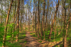 Cherokee Park path (Connie A Moore) Tags: urban spring hiking kentucky louisville cherokee hdr topaz adjust