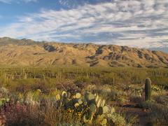 This is the stuff (rovingmagpie) Tags: arizona tucson saguaronationalpark squeezepentrail saguaro cactus clouds sb2012 geotagged geo:lat=322177481637815 geo:lon=1107006974648819