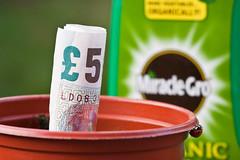 Wishful thinking! (ClawzCTR) Tags: money macro green project ladybird fertilizer growing miraclegro tp 2012 plantpot fiver week9 £5 52weeks sigma105mm 40d talkphotography terecotta photo52