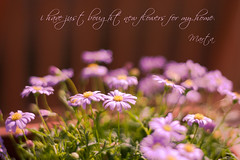 in my home (Marta Fradusco Photography) Tags: flower color nature canon spring focus soft dof bokeh pov fineart daisy dreamy martafraduscophotography