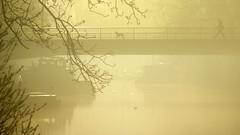 Walking the dog (Harry Mijland) Tags: mist holland fog gold utrecht vecht dearharry harrymijland