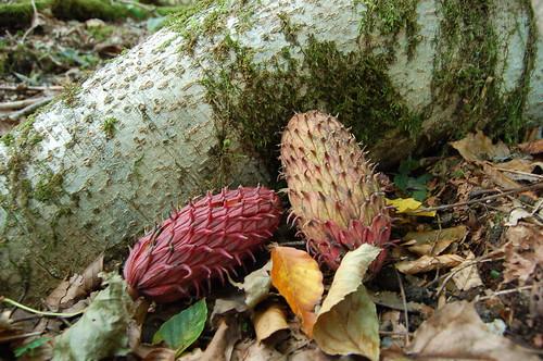 ★森の秋★富士山の森から…
