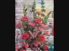 trandyflower-ร้านดอกไม้ vdo