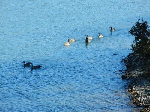 Sundial Bridge, Turtle Bay, Redding, California _ 5393