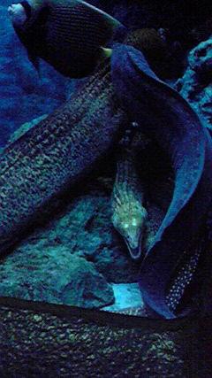 東海海洋科学博物館でウツボ写真の写真
