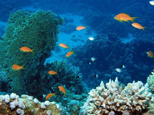 Reef scene at Marsa Shouna, Red Sea, Egypt #SCUBA