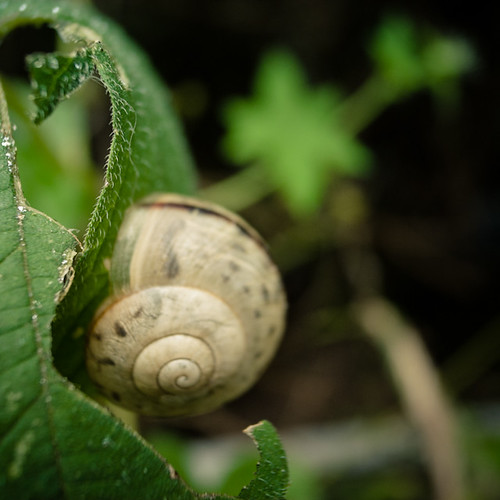 Afternoon Wander, Snail