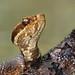 Alert Snake