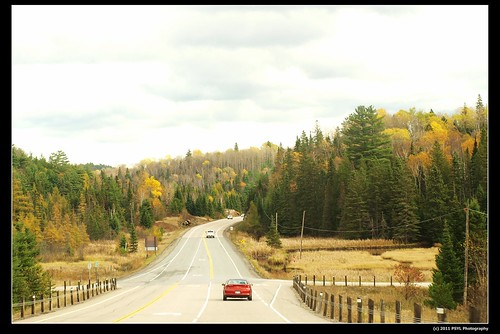 Driving through Algonquin