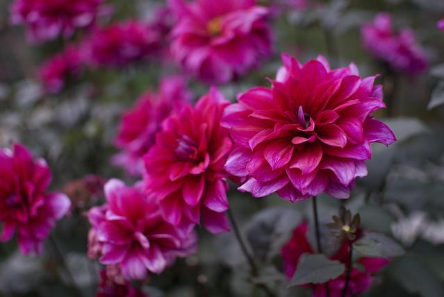 42 flower