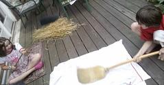 Wheat 7