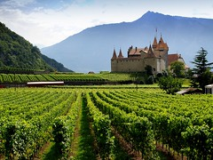 a medieval jewel (mujepa) Tags: alps castle museum alpes switzerland vineyard suisse vine medieval muse vin fortress vignoble chteau vaud aigle  mdival     mygearandme bbng rememberthatmomentlevel4 rememberthatmomentlevel1 rememberthatmomentlevel2 rememberthatmomentlevel3