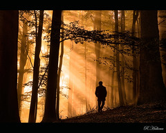 Morning Walk (Robin Halioua) Tags: morning autumn nature fog forest sunrise landscape schweiz switzerland walk glory herbst morningglory morgen mystic lightrays spaziergang albis mysticforest langnauamalbis ringexcellence