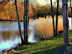 autumn light (mujepa) Tags: autumn trees light france fall automne reeds pond lumire arbres lorraine roseaux tang arssurmoselle mygearandme outremoselle blinkagain bestofblinkwinners artistoftheyearlevel2 bbng rememberthatmomentlevel1 rememberthatmomentlevel2 rememberthatmomentlevel3