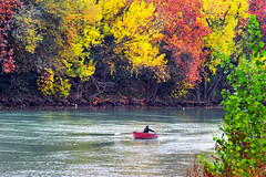 ...er barcarolo va... (zio paperino) Tags: autumn trees italy rome roma water leaves river boat nikon italia fiume tevere autunno d90 ziopaperino mygearandme mygearandmepremium mygearandmebronze mygearandmesilver mygearandmegold mygearandmeplatinum