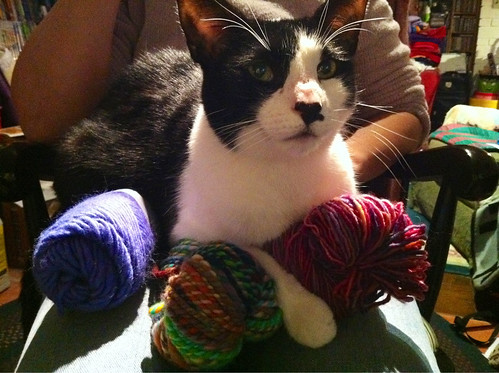 Jer has all the yarn