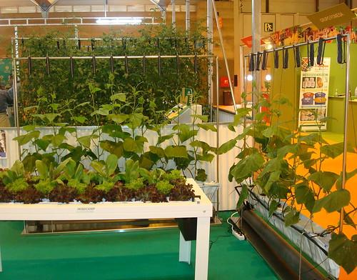 Para cultivar en el balcón de casa by Grupo THM, tecnologías horticultura mediterránea