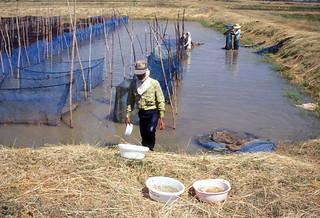 Aquaculture, Thailand. Photo by WorldFish, 2004