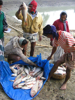 Aquaculture, Bangladesh. Photo by Martin Van Brakel, 2007