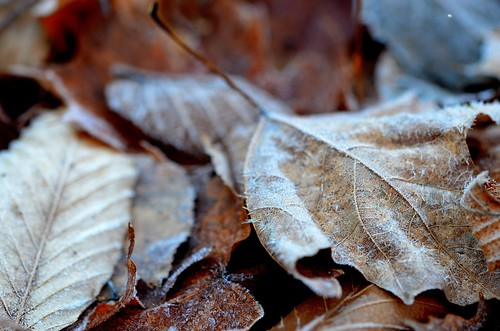 frostyleaves_139