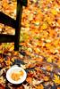 Raining day of Fall (Liu Yuyang) Tags: fall 落叶 秋雨