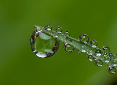 Dewdrops (ronibiza) Tags: macro nature dewdrops refraction