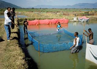 Aquaculture, Malawi. Photo by Randall Brummett, 2002