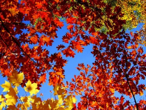 Fall Leaves Google Image