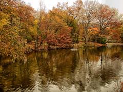 Autumn Reflections (CVerwaal) Tags: nyc newyorkcity autumn lake newyork fall colors pen reflections centralpark olympus autumncolors thelake autumninnewyork olympusep2 lumix14mmf25