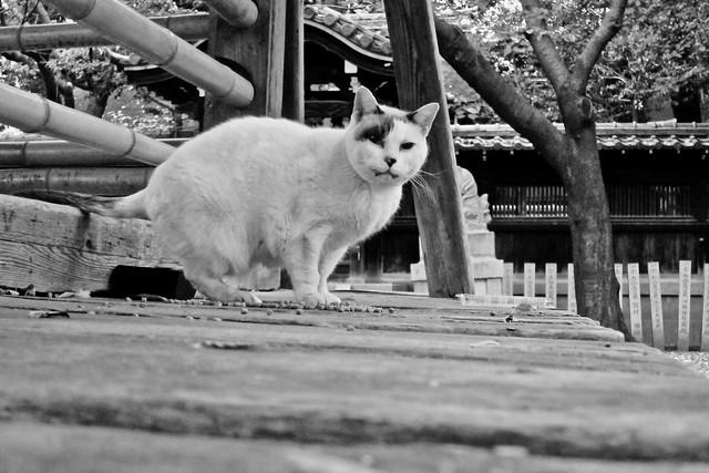 Today's Cat@2011-11-18
