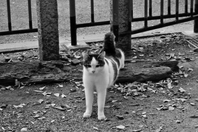 Today's Cat@2011-11-20