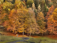 Track, ladies and fall (Paco CT) Tags: wood autumn people fall forest landscape spain friend track place gente camino path escenario paz paisaje bosque scenary otoño carmen esp lleida 2011 pacoct