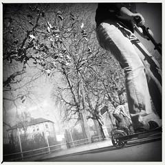 shoe tree (auketts) Tags: photostream hipstamatic skatepark kingston iphone4 mono iphone