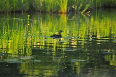 DSC_5034 (Debbie Prediger Photography) Tags: camping lake photography wildlife debbie prediger