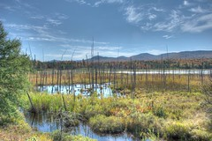 Pond in Adirondacks (Daniel J. Mueller) Tags: park trees summer usa ny clouds dead pond state indian adirondack