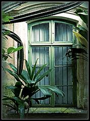 janela com moldura viva (Explored) (silwittmann) Tags: old brazil green history sc window arquitetura brasil architecture culture explore sensational pomerode germanimmigration silwittmann