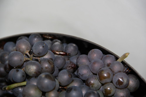 Earwigs in the grapes!