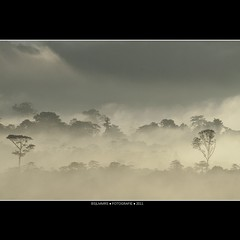 Malaysia: Standing in line [Explored] (Bas Lammers) Tags: road sun mist mountains tree fog forest sunrise canon airport miri jungle malaysia layers cave sunray mulu 50d mygearandme mygearandmepremium mygearandmebronze mygearandmesilver mygearandmegold mygearandmeplatinum mygearandmediamond