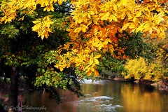 Framed in Gold (socalgal_64) Tags: autumn trees fall nature water beauty leaves creek reflections river gold golden colorful stream seasons natural bright pennsylvania framed seasonal scenic foliage pa landscaoe schnecksville musictomyeyeslevel1 howardsgallerysubmitted