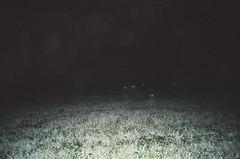 (Gebhart de Koekkoek) Tags: animals night forest austria eyes mju deer