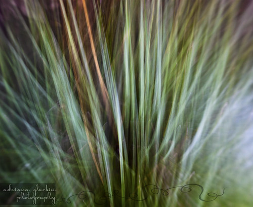 spring abstract_7