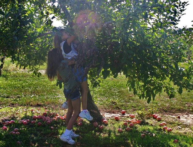 Emma helping Karli pick some apples